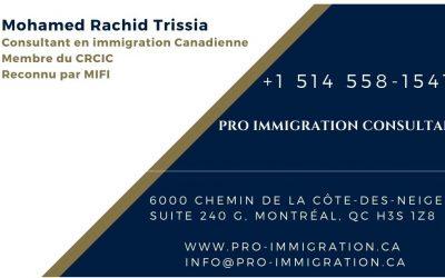 Pro Immigration Consultant
